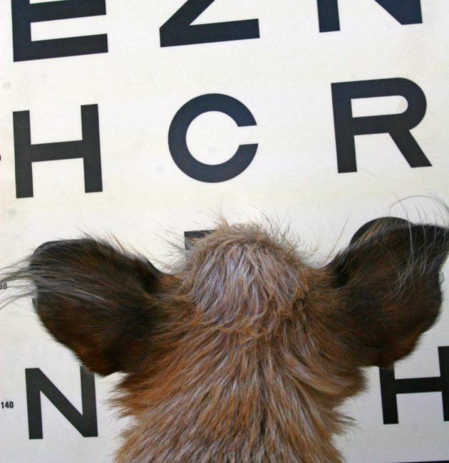 Focusing On Your Pet's Eye Health. Animal Eye Doctors: